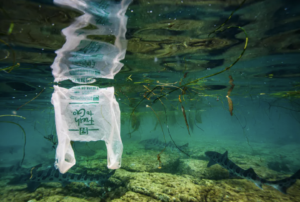 Read more about the article Hundreds of fish species, including many that humans eat, are consuming plastic
